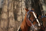 Horses and Stephen Cathedral (Vienna)